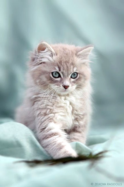 Sweet Kitten Photo