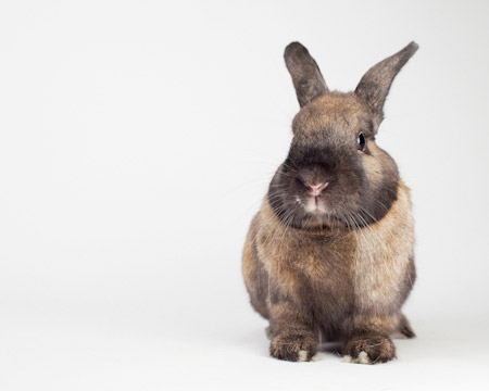 Bumper Adoptable Rabbit