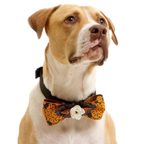 Halloween Dog Bowtie