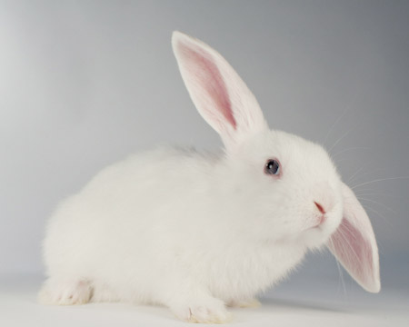 Pebbles Adoptable Bunny