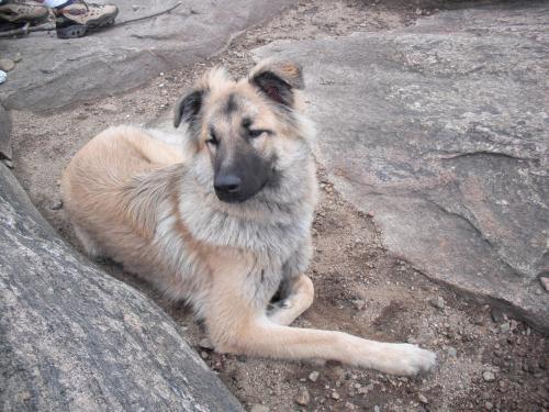 Coco Adoptable Dog