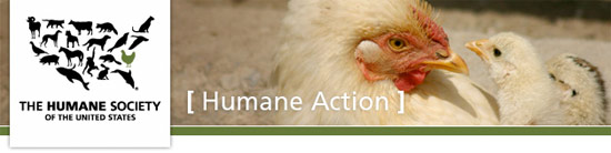 HSUS Improve the Lives of Egg Laying Hens